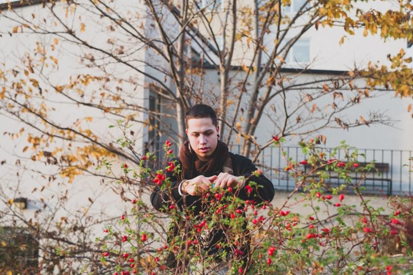 stockholm_rosehip_autumn-69