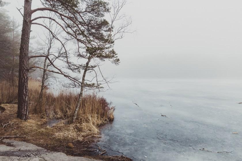 stockholm_antligenvilse_tyresta-42