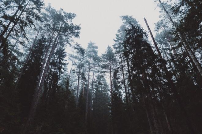Förtrollande trollskogar