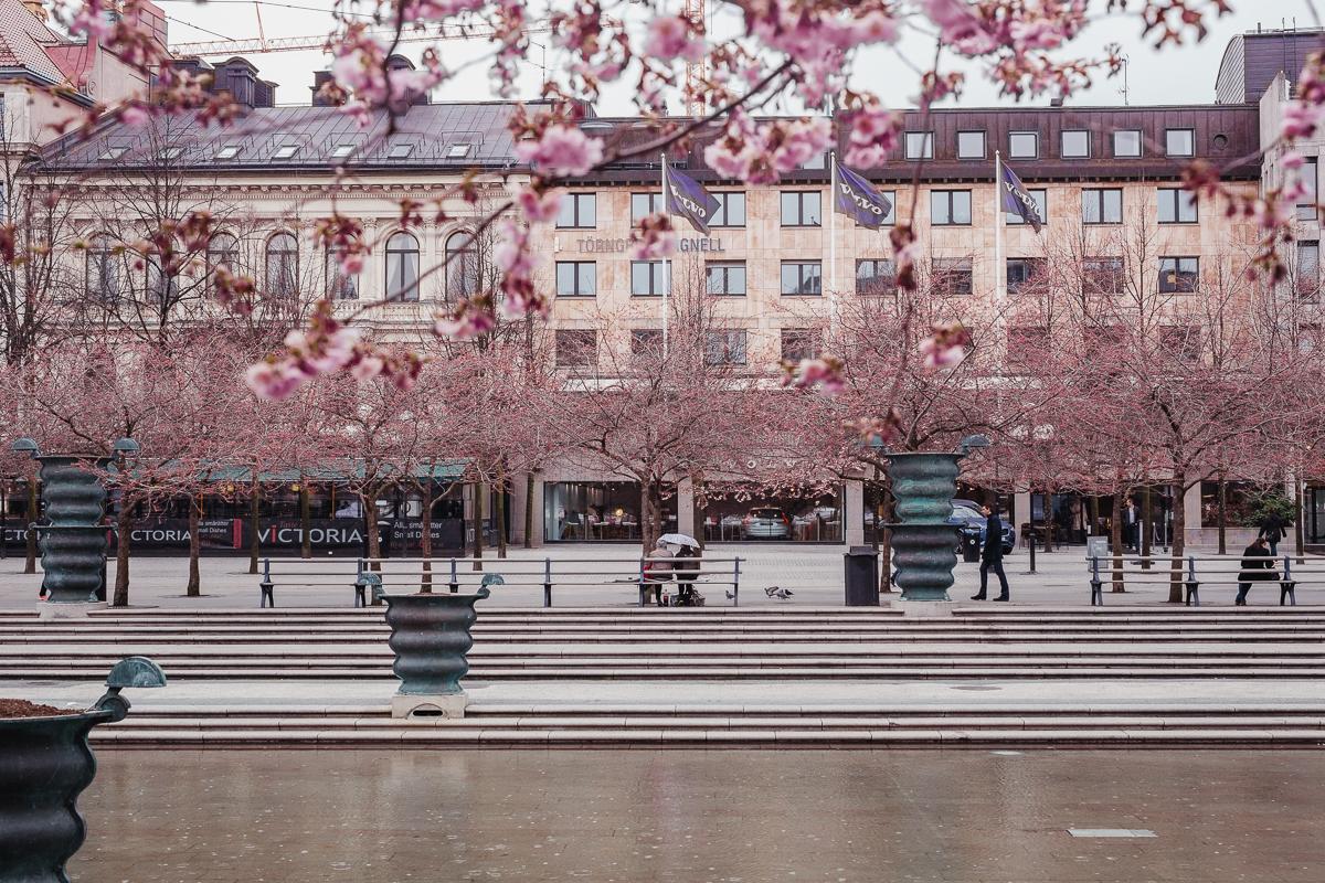 antligenvilse_stockholm-14