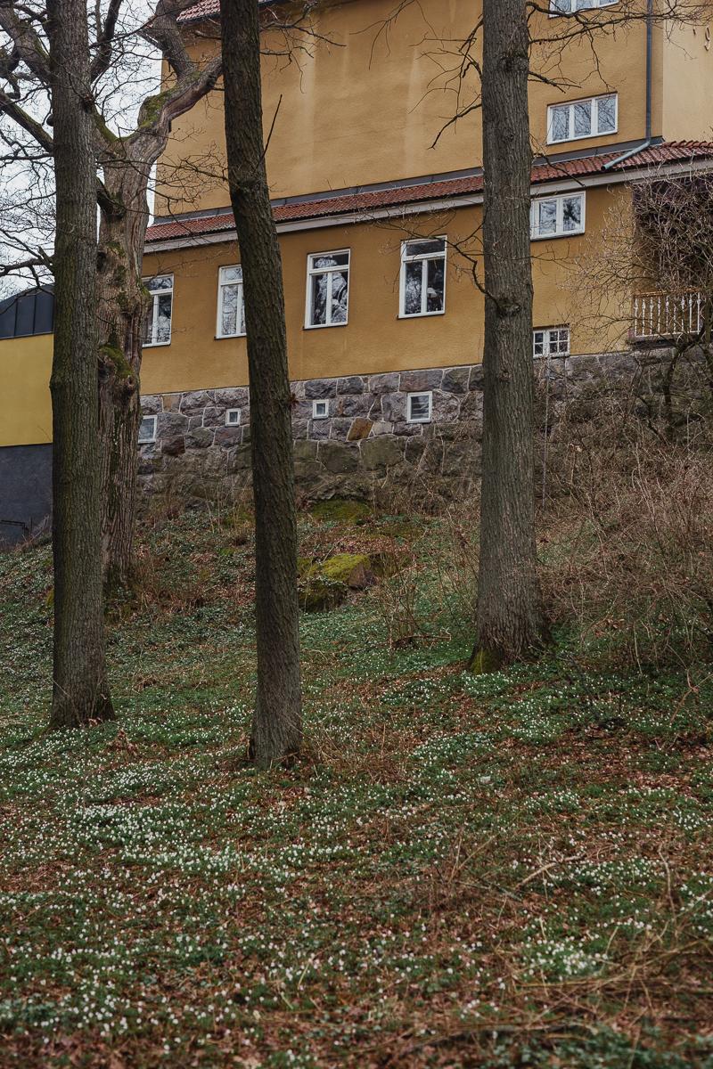 antligenvilse_stockholm-74