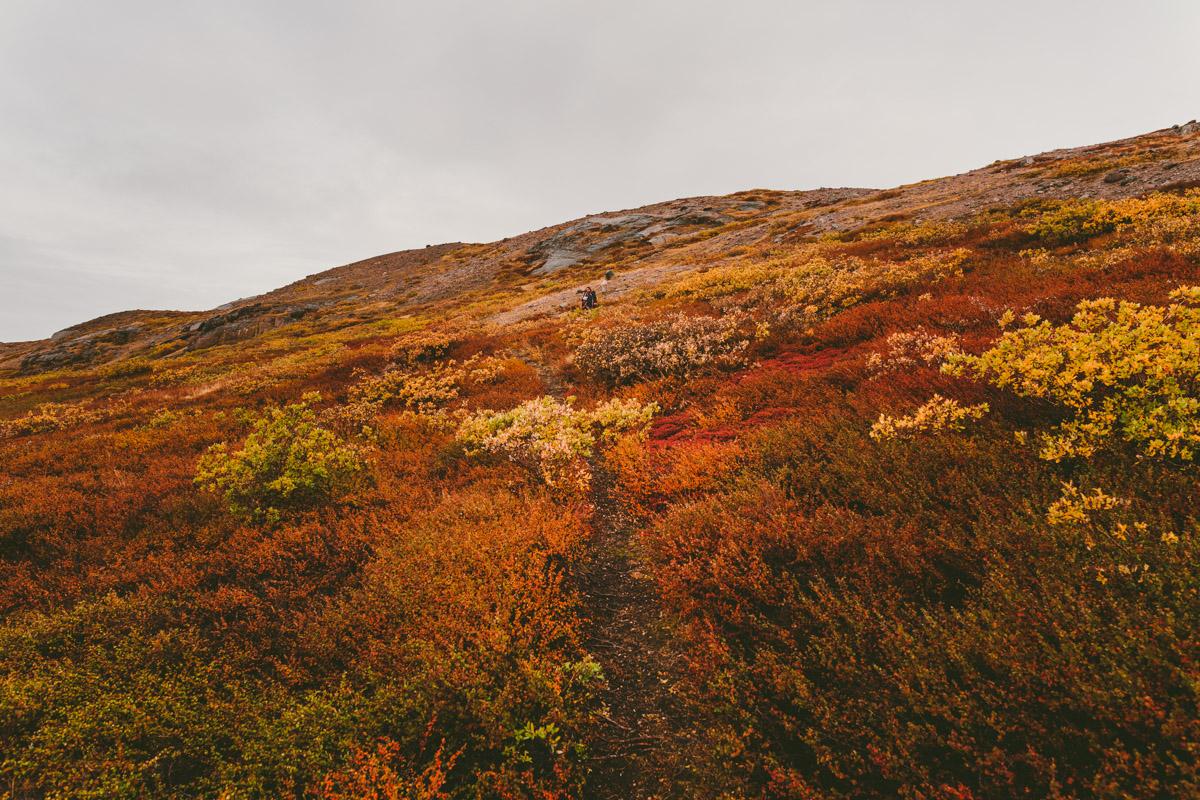 arktisk_oken_gronland-11