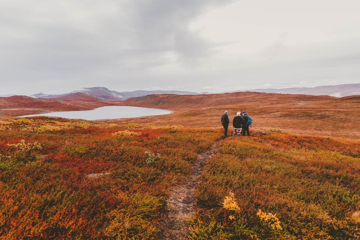 arktisk_oken_gronland-12