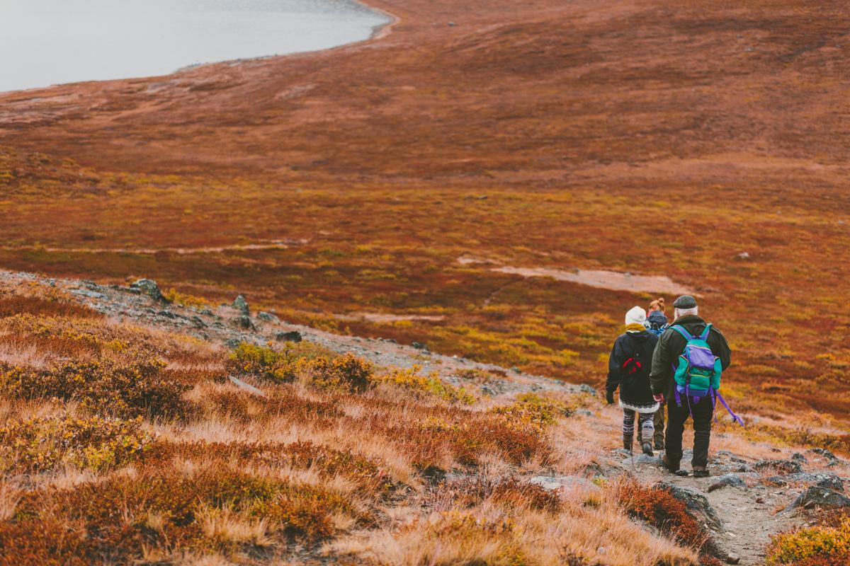 arktisk_oken_gronland-7