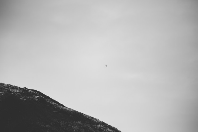 arktisk_oken_gronland-44