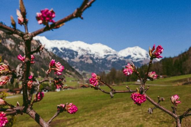 Vår i Alperna