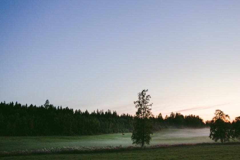 När skogsrået med stoltet och styrka dansar ensam genom sommaren