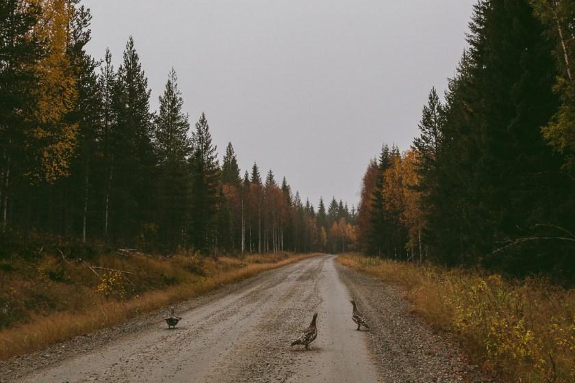 I björnars fotspår – Björnlandets nationalpark