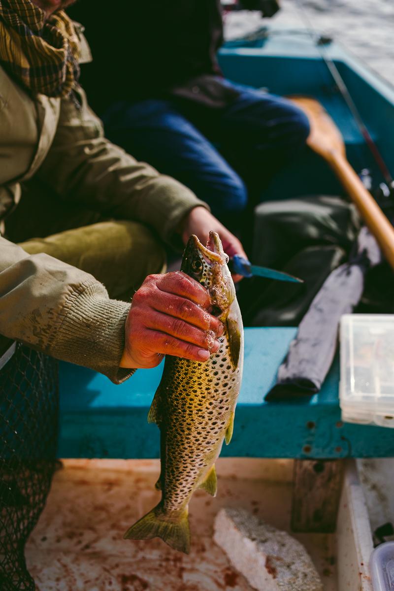 fiska i nordnorge norge