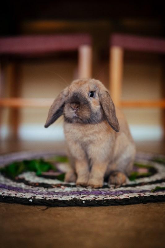 nisse kanin äntligen vilse