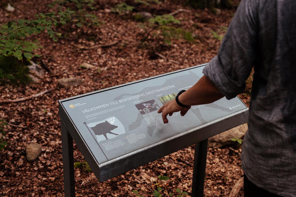 upptäck bokskogen i åsnen