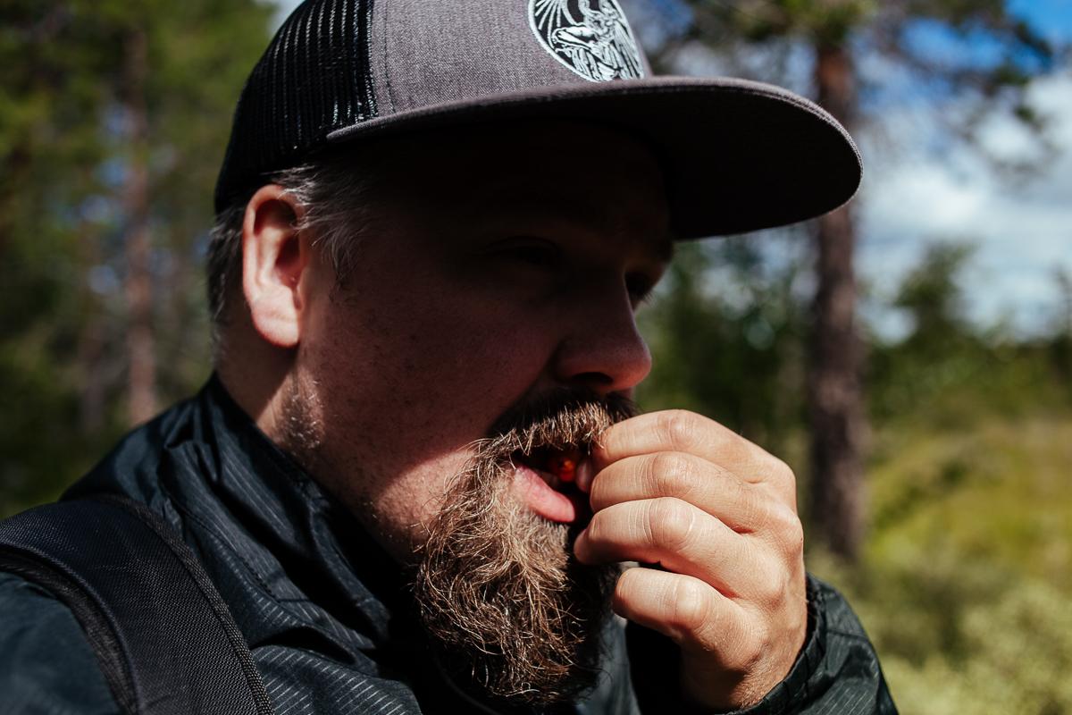 äta hjortron i vildmarken hamra nationalpark