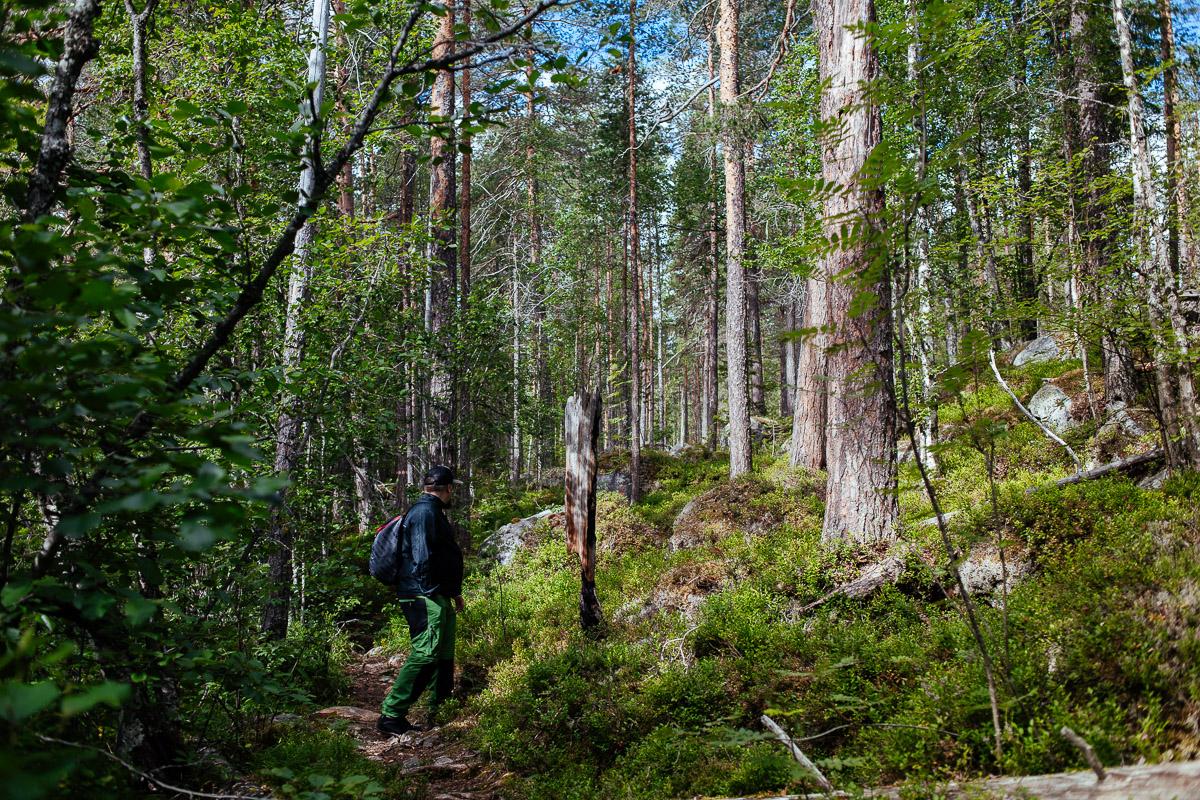 skog hamra nationalpark