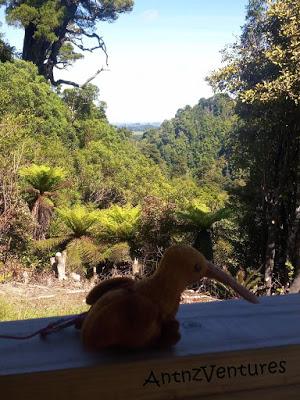 Kaha, a Beanie Baby Kiwi sitting on a handrail over looking NZ forest