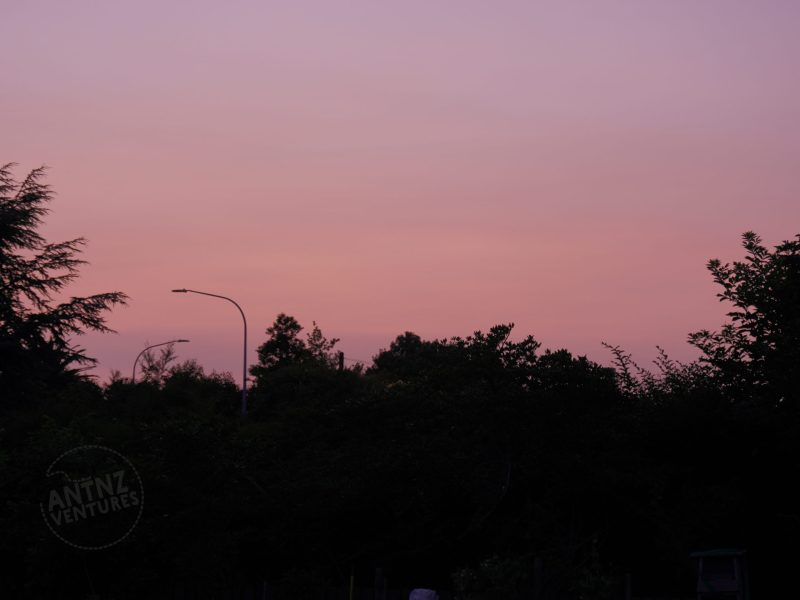 A pink sky with trees framing the sides and 1/2 way up the image, dawn of 1 Jan 2020