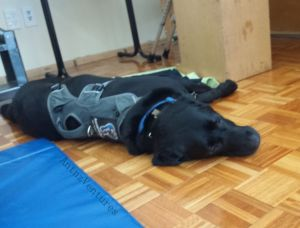 ADNZ Ben sprawled out on his side next to a gym mat.