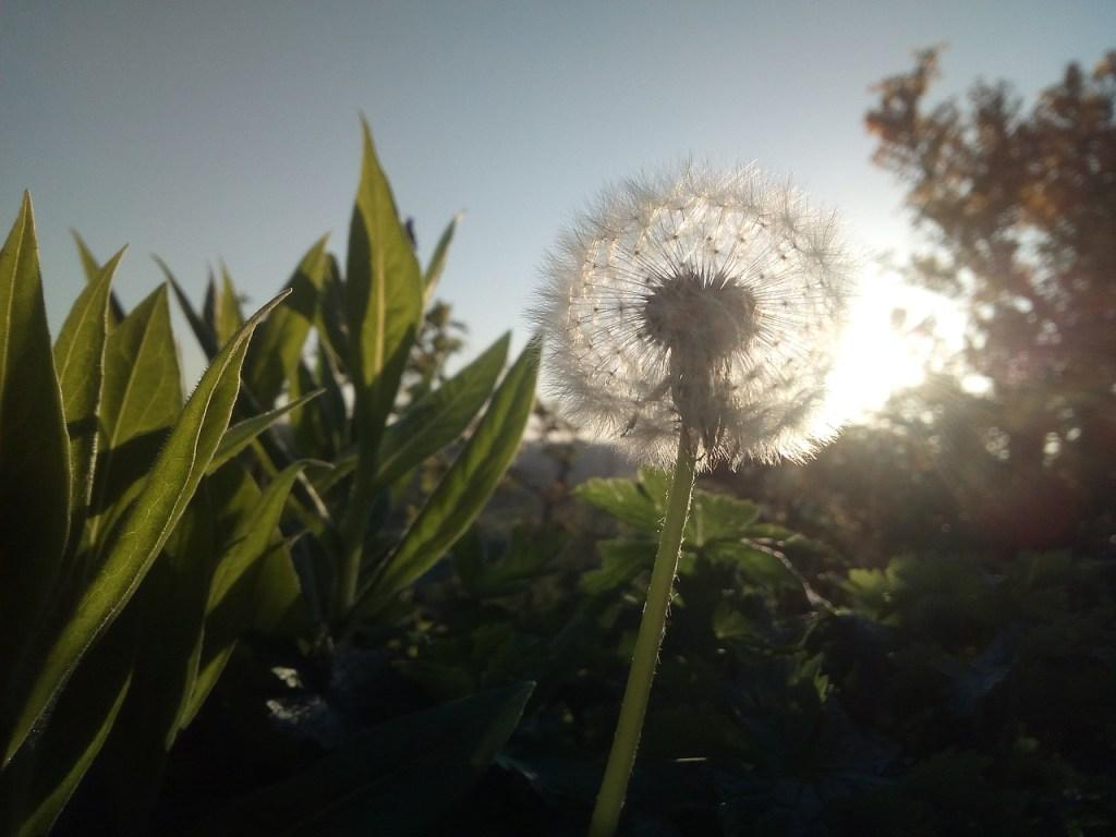 Placeboeffekten – Är den mänskliga potentialen oändlig?