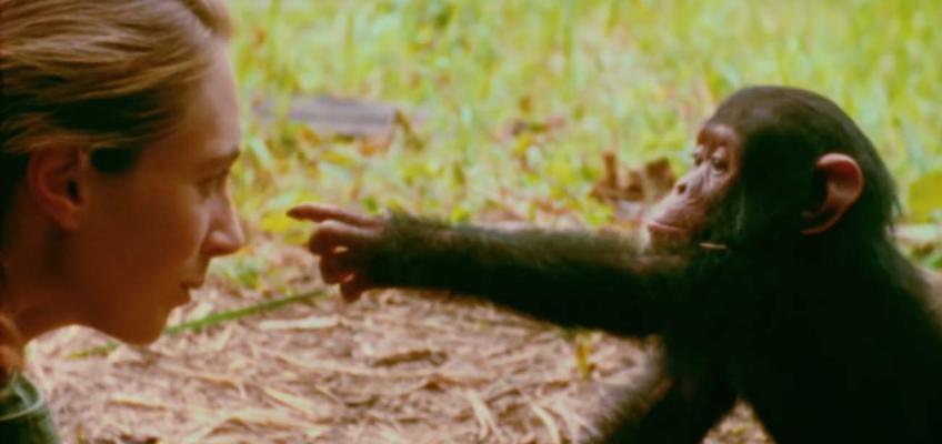 Lo que nos separa de los simios