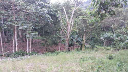 terreno-residencial-en-venta-en-jarabacoa-jarabacoa-10166