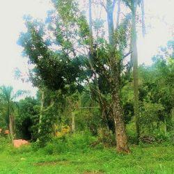 solar-de-venta-en-zona-turistica-jarabac-terreno-residencial-en-venta-en-buena-vista-jarabacoa-15823