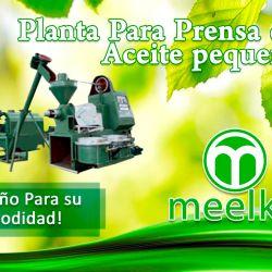 01-Planta