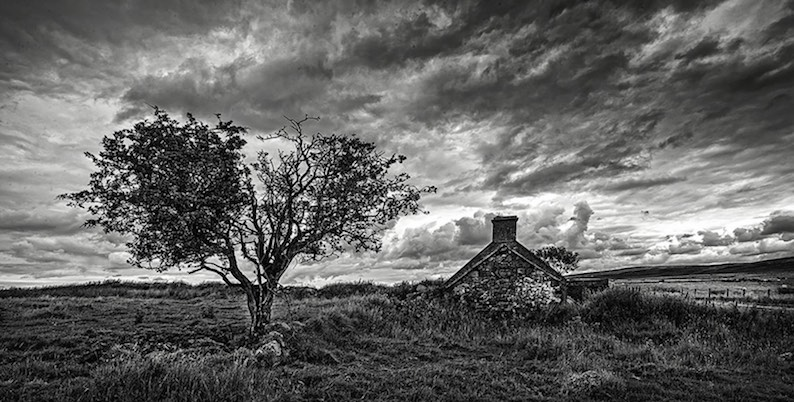 black and white image of ruined house and tree
