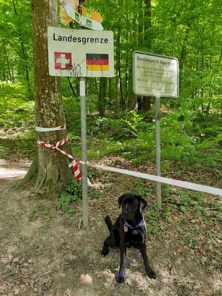 black dog at Swiss border