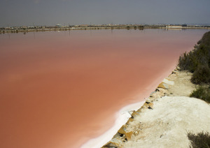 Red Salt Lake