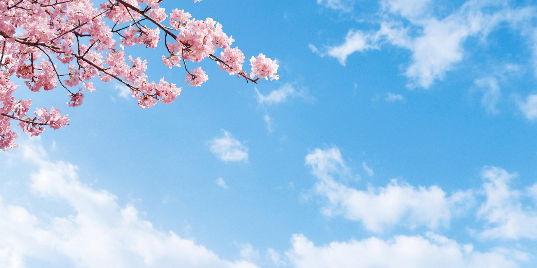 青空と桜で春のイメージ写真