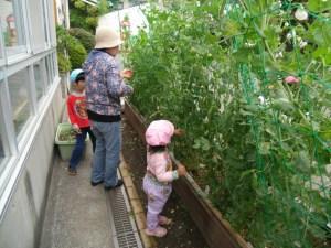 お豆収穫♪