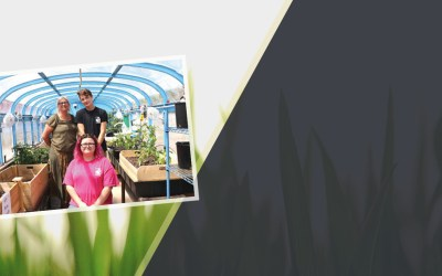 AOBI converts bus into a greenhouse that provides fresh vegetables