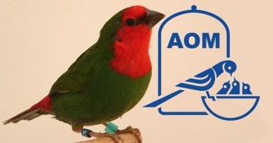11 Mostra Ornitologica 2004