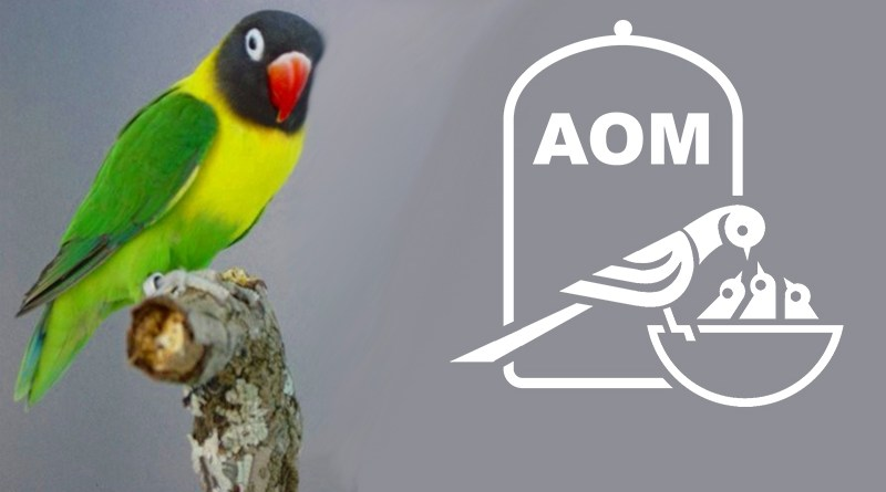 16 Mostra Ornitologica 2011