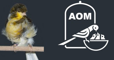 18 Mostra Ornitologica 2013