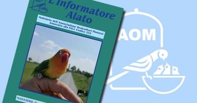 Informatore Alato 2020 - N 116