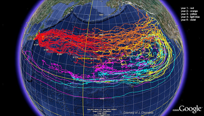 Image of NOAA Japan Tsunami Marine Debris Model with the OSCURS Model showing the different colors predicting the movement of marine debris generated by the Japan tsunami over five years. The results are shown here. Year 1 = red; Year 2 = orange; Year 3 = yellow; Year 4 = light blue; Year 5 = violet. The OCSURS model is used to measure the movement of surface currents over time, as well as the movement of what is in or on the water.