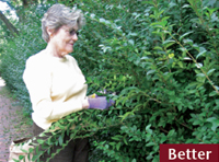 """Adult woman pruning shrubbery demonstrating better ergonomic approach with both feet on the ground, pulling branches down to her level before pruning them."""