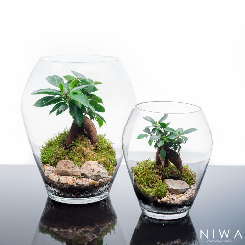 NIWA, les bulles végétales