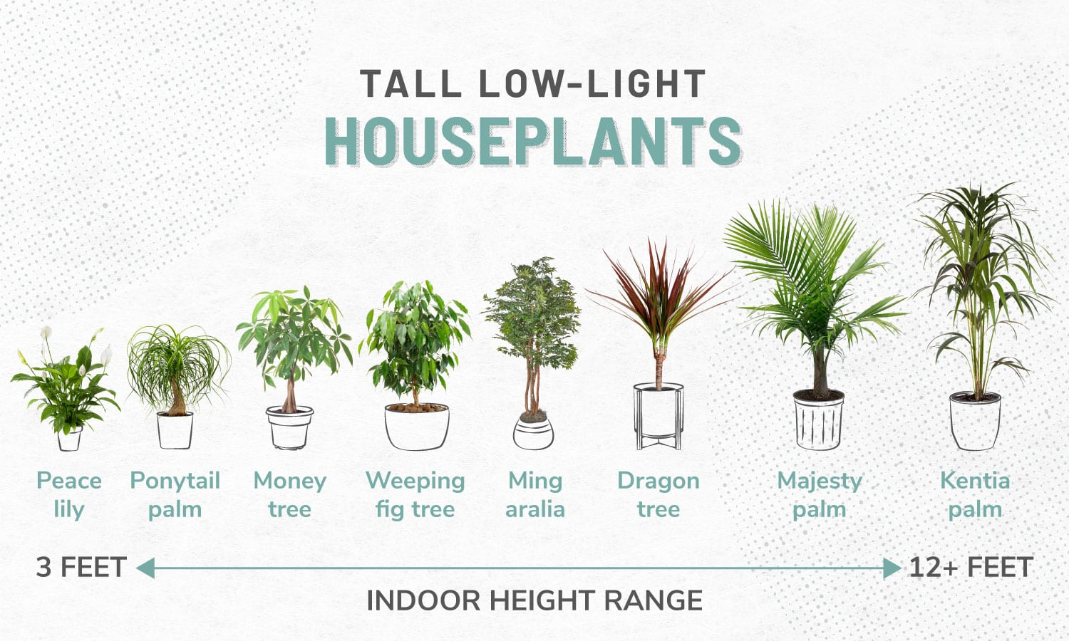 33 Low Light Houseplants To Bring Your Space To Life Apartmentguide Com