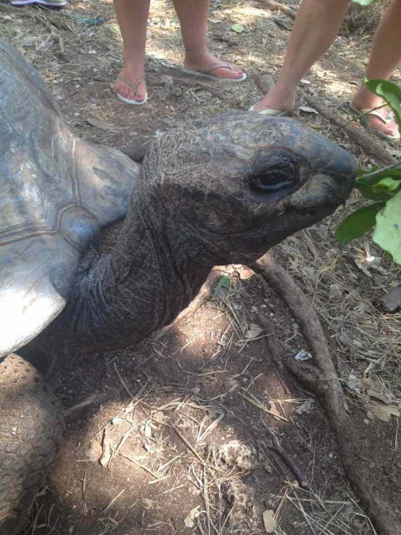 tartarughe, zanzibar, prison island