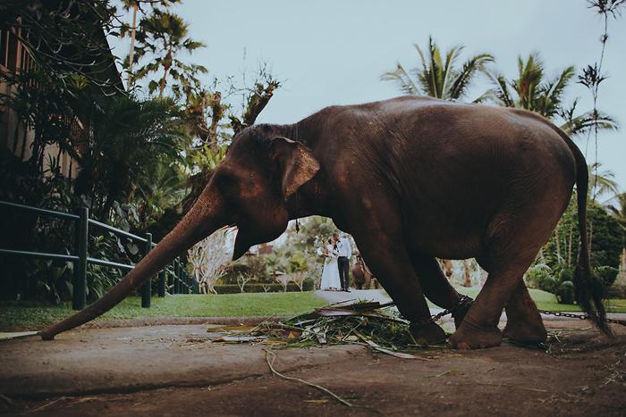 ApelPhotography-Baliweddingphotos-ElephantWedding-Destinationwedding-bestweddingphoto (45)