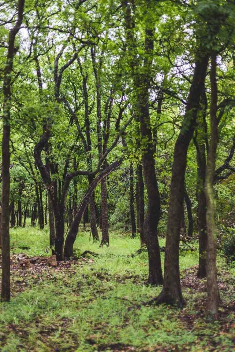 Trees In a Neighborhood Park