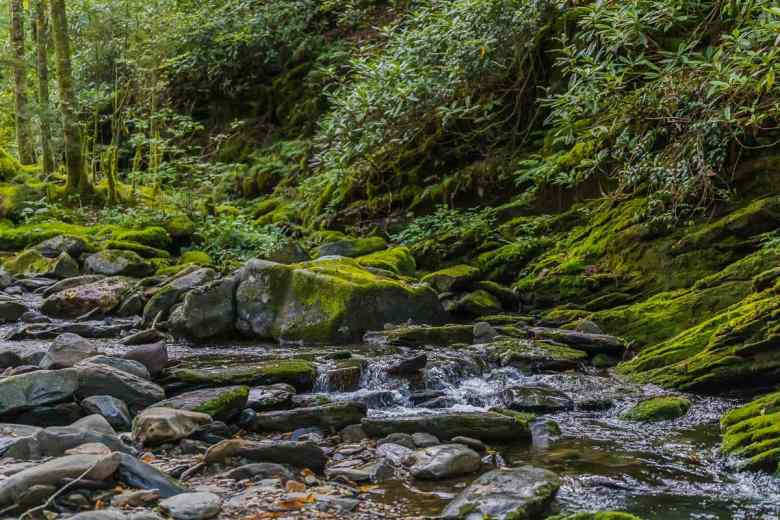 stream runs through a quiet forest over moss covered rocks
