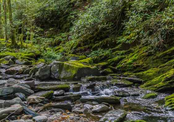 stream runs through a quiet forest over moss covered rocks