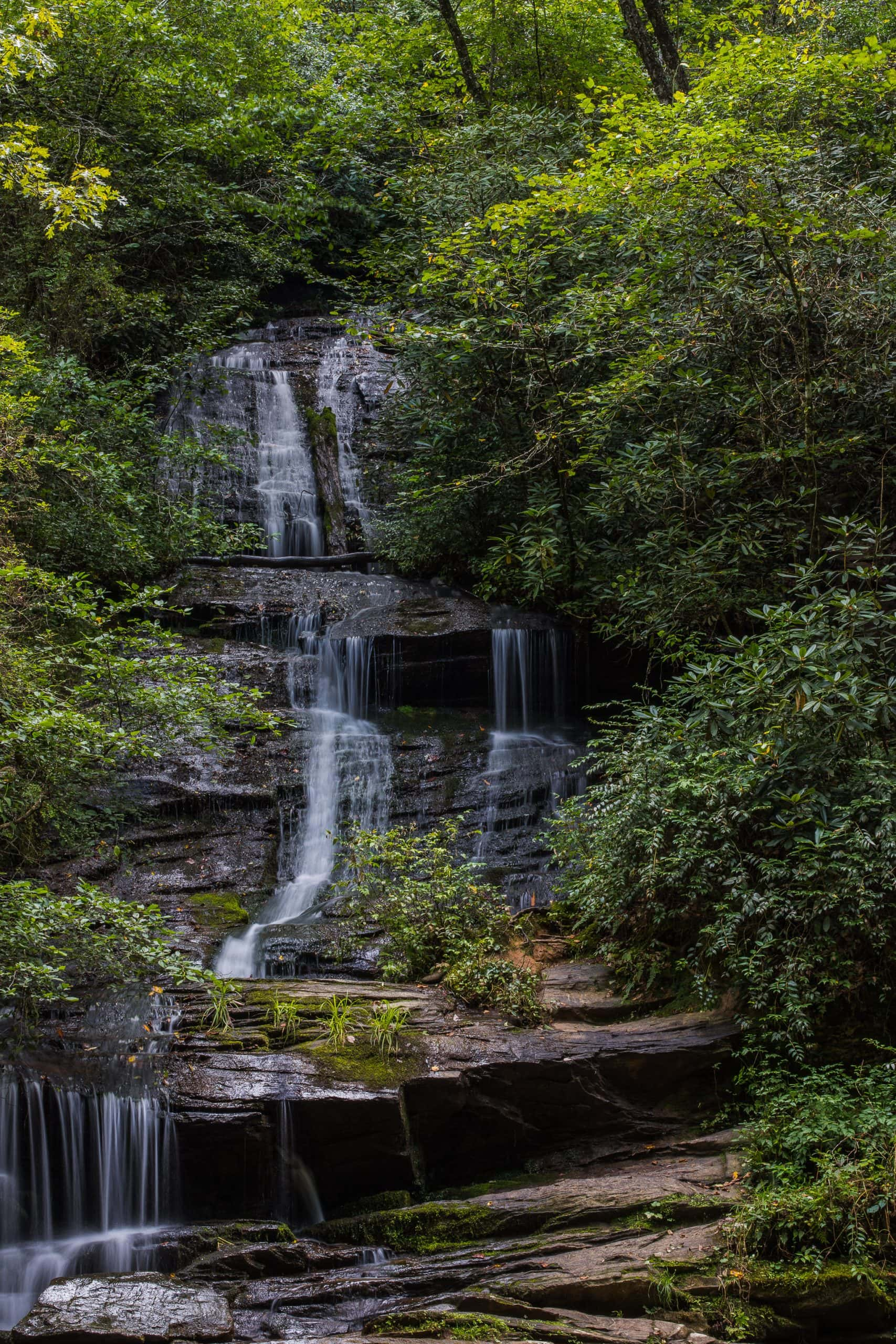 Wide shot of Tom Branch Falls and surrounding trees