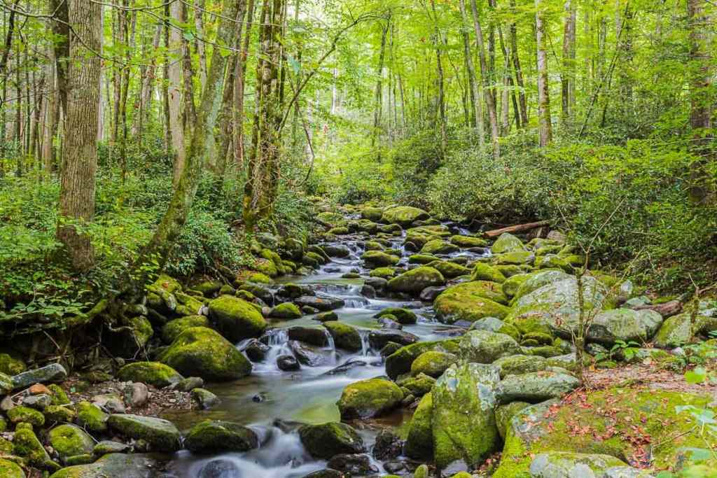 Tranquil stream in the Great Smoky Mountains lush green forest