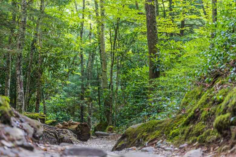 Winding Hiking Path of the Great Smoky Mountains