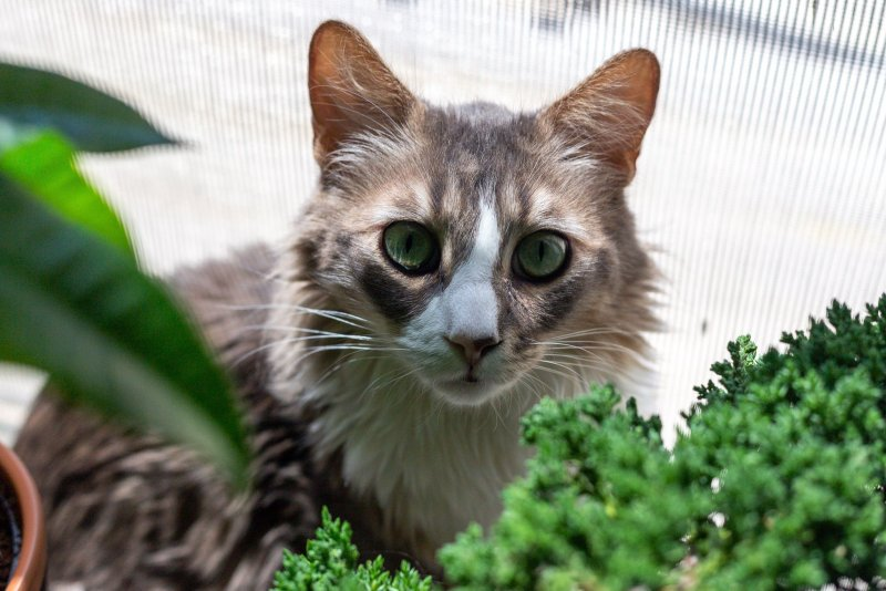 cat hiding behind plants