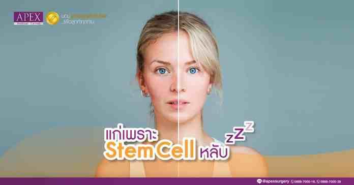 สเต็มเซลล์
