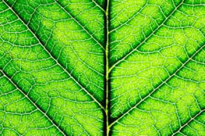 Artificial Photosynthesis May Help The Environment